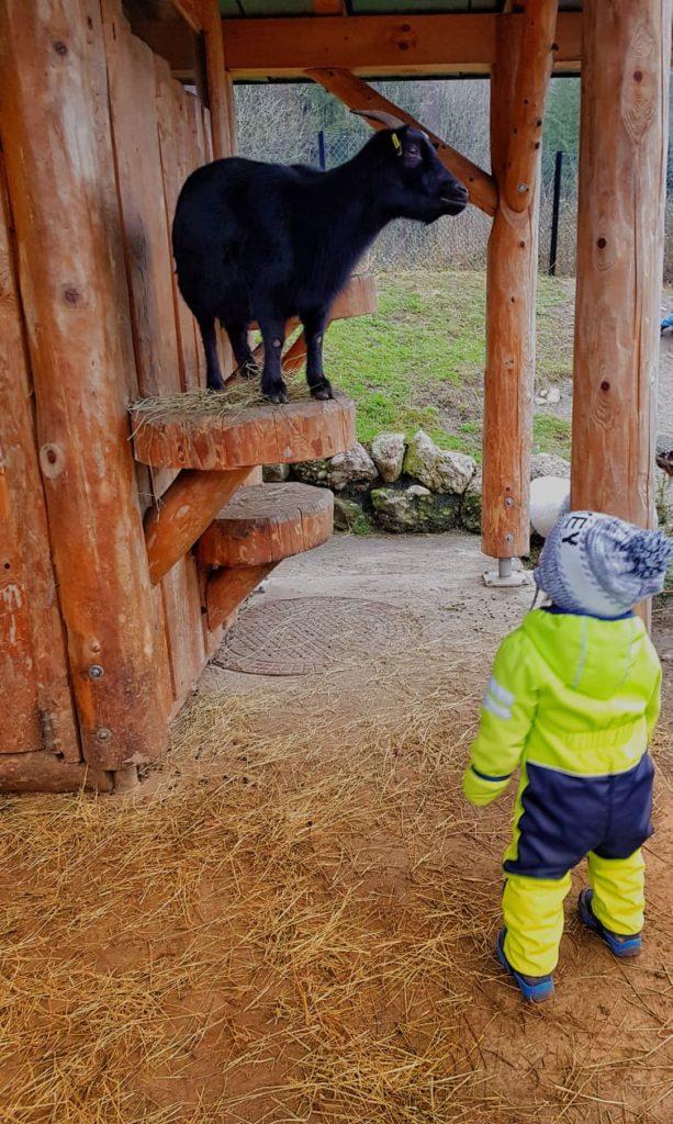 Im Tierpark Goldau gibt es Abenteuer für Gross und Klein.