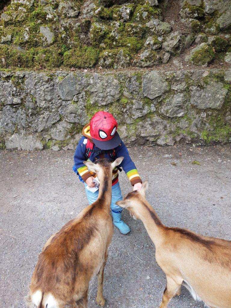 Im Tierpark Goldau können Tiere gefüttert werden.
